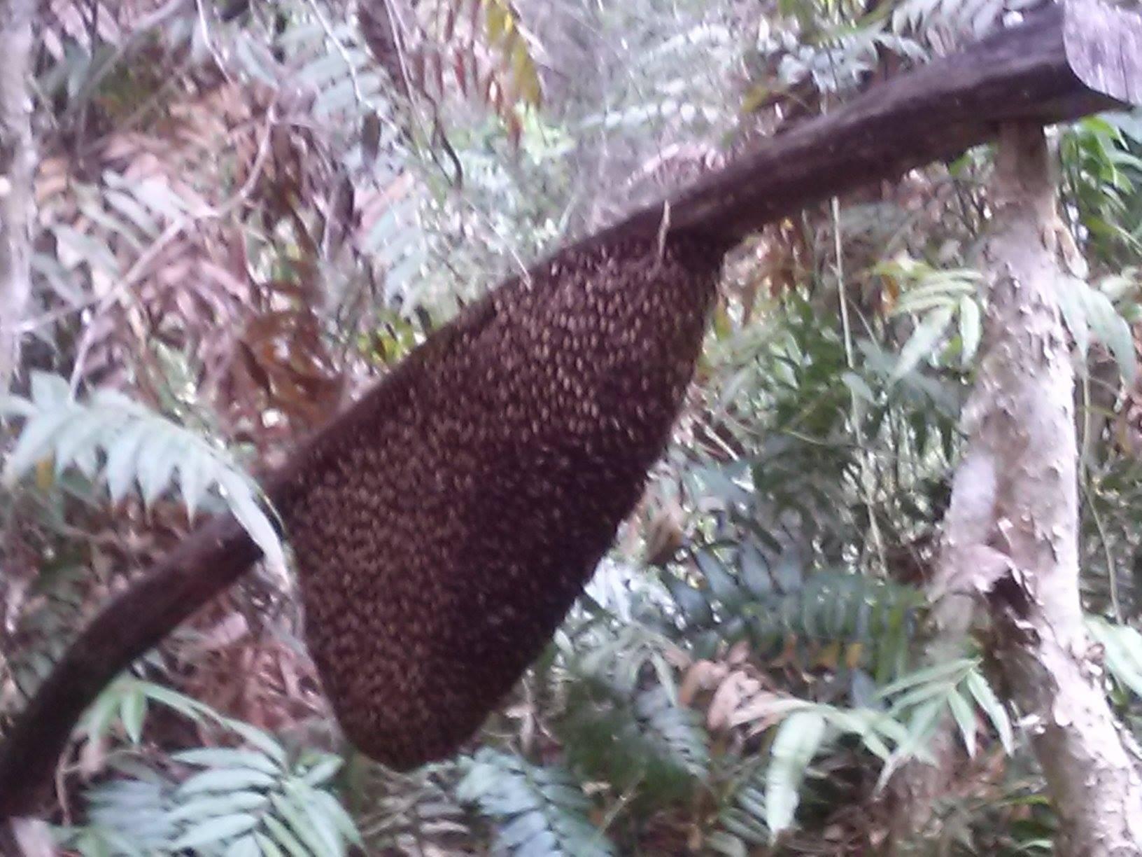 Mật Ong Rừng,Mật Ong Rừng U Minh,mật ong nguyên chất