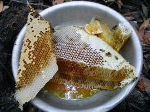 Mật ong rừng U Minh - Nguyên tổ