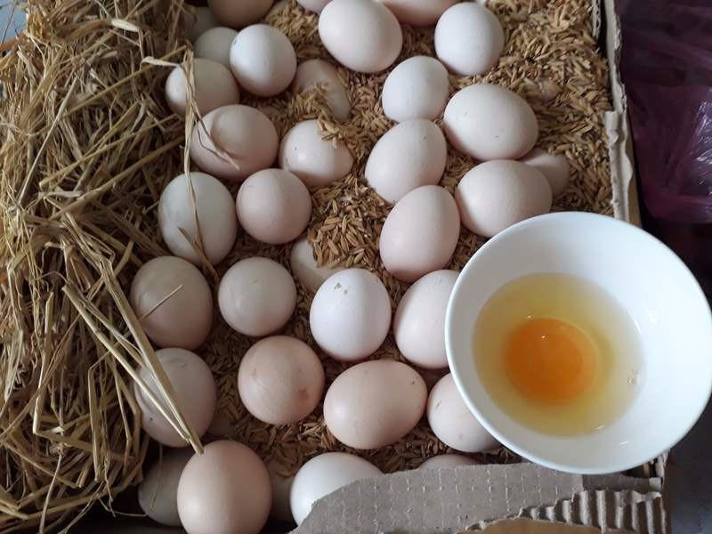 lòng đỏ trứng gà giàu chất dinh dưỡng