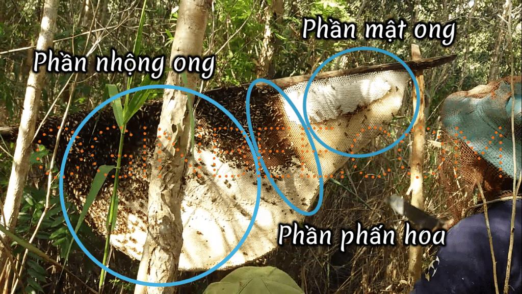Gác kèo ong ở rừng tràm U Minh hạ