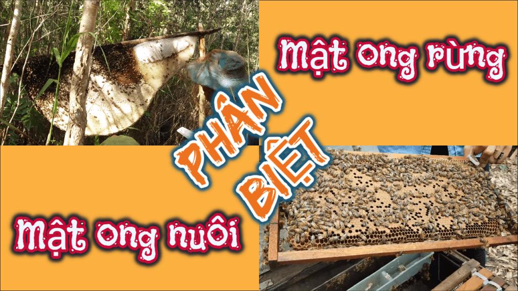mật ong nuôi, mật ong rừng