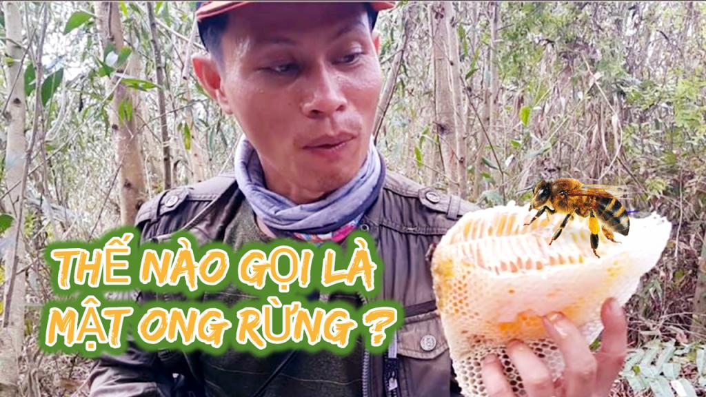 Thế nào mới được gọi là mật ong rừng